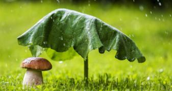 Прогноз погоди у Горохові на 6 липня