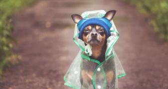 Вдень спека, вночі зливи: якою буде погода цього тижня