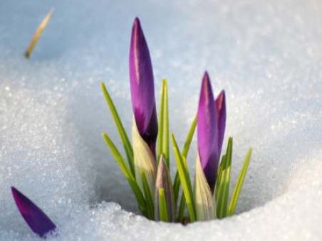 У Горохові 28 березня знову йтиме сніг