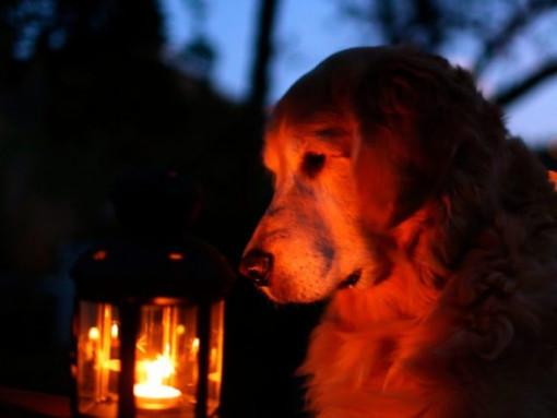 Де на Горохівщині не буде світла 29 травня