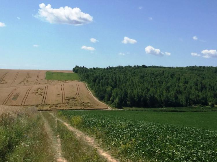 На Горохвщині виявили порушення земельного законодавства