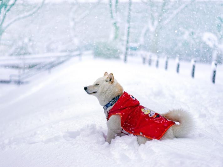 Погода у Горохові на четвер, 23 січня