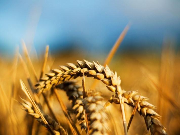 На Горохівщину приїде група операторів «Аграрного реєстру»