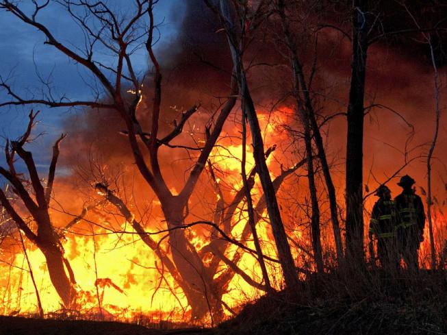 Вогонь може перекинутися на лісові масиви