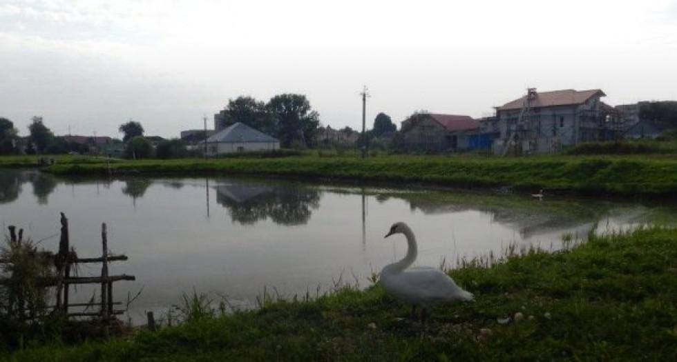 Горохівський ставок