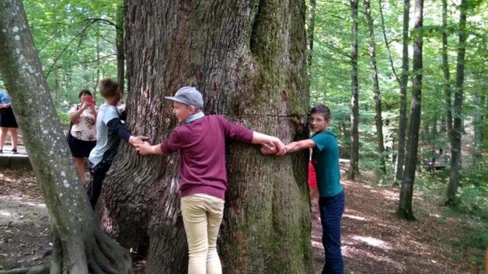 Могутнє дерево