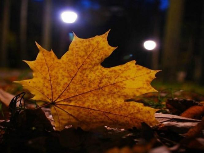 Осінні вечори в Горохові