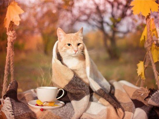 На горохівчан чекає осіннє похолодання