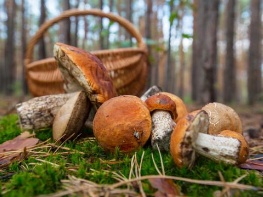 Двоє грибників з Горохівського району заблукали в лісі