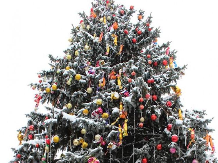 У Горохові засяяла головна новорічна красуня