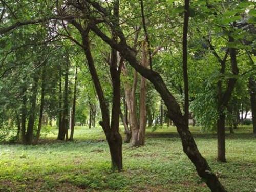 У Горохові з'явився парк-пам'ятка