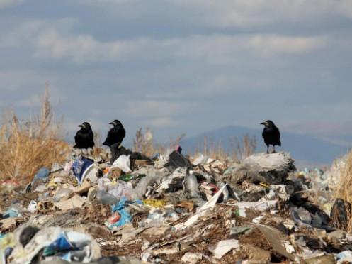 У Горохові висловили всі «за» і «проти» щодо будівництва цегівського сміттєзвалища