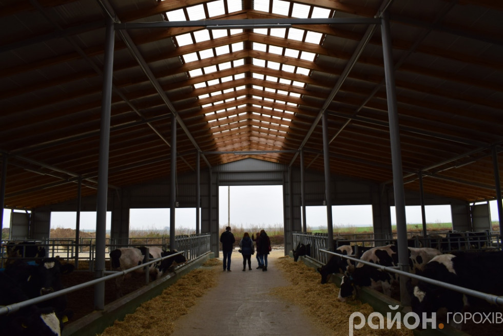 Новенькі  корівники … без стін