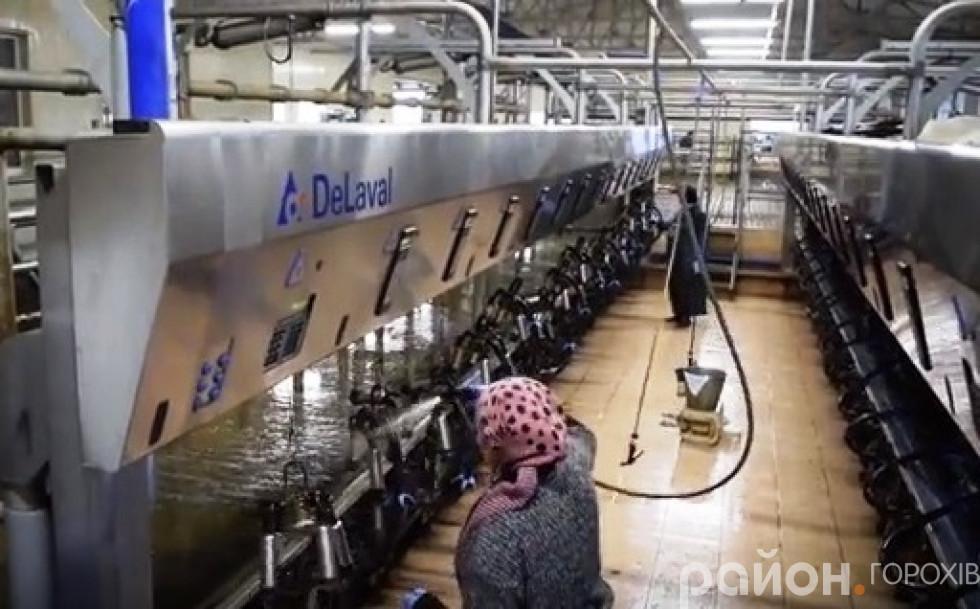 Доїльний зал миють перед тим, як корівки у нього зайдуть