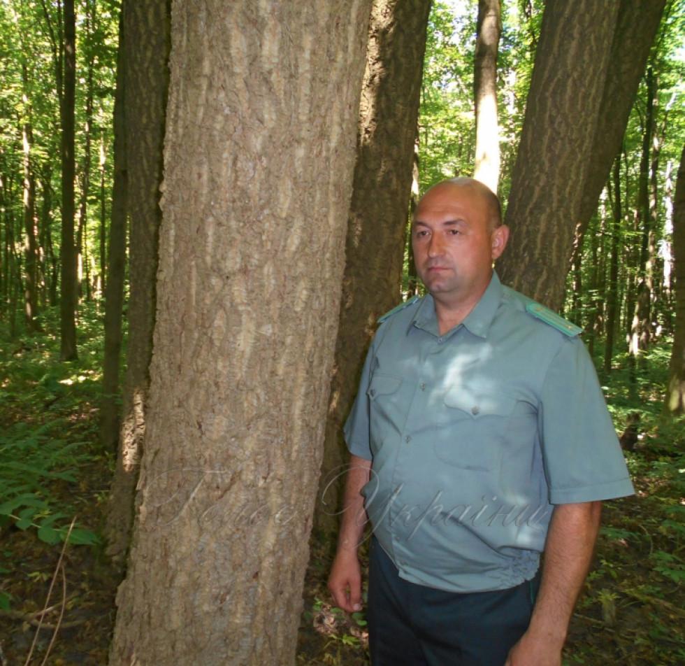 Лісничий Микола Романюк на ділянці лісу, де росте бархат амурський