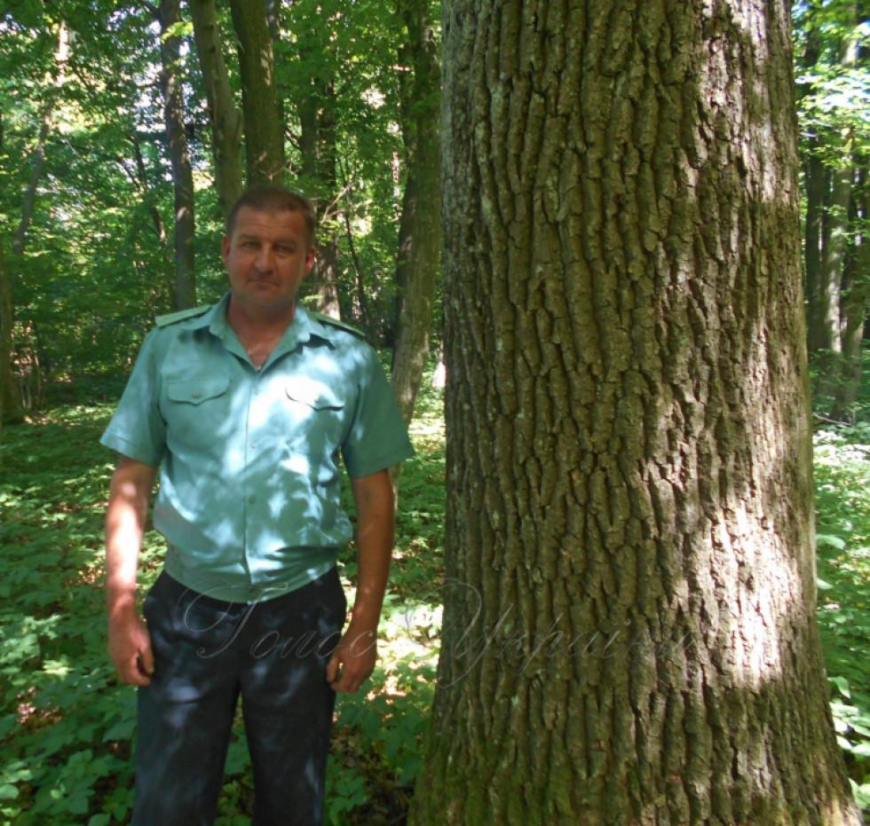 Лісничий Олег Галтман біля одного з дубів-красенів, посаджених ще у 1920-х роках біля Холонева