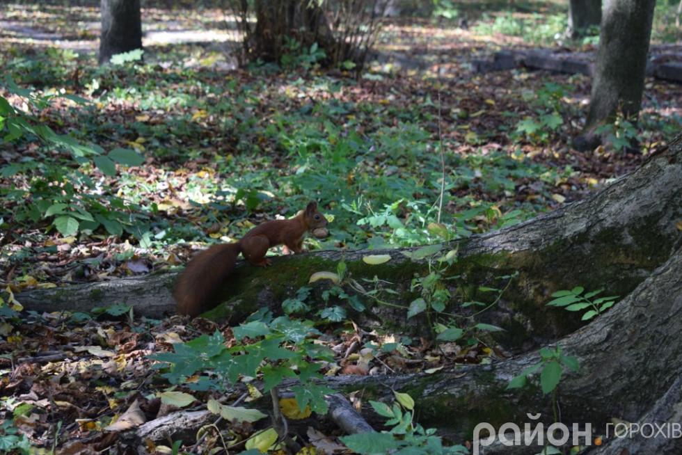 У парку Пляторів нацисти розстріляри кочовий табів ромів, який проходив поряд з Берестечком